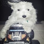 BlogPaws Blog Hop: Wordless Wednesday – Wanna Ride?