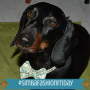 Walter the Doxie ft
