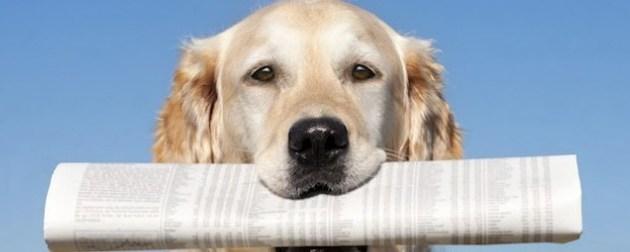 Vidéo de dressage de chien