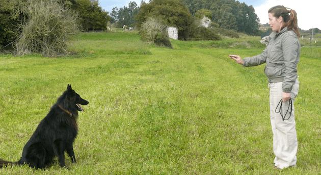 comment dresser son chien pdf