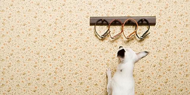 Dresser son chien a garder un objet