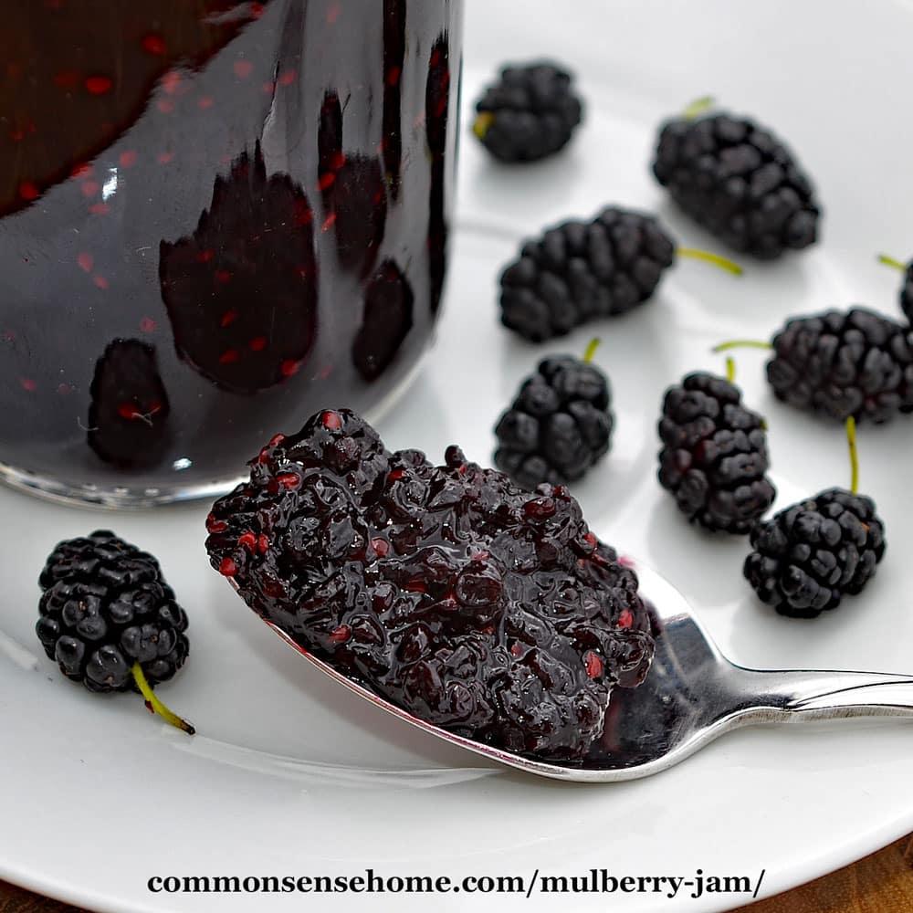 Fullsize Of Mulberry Vs Blackberry