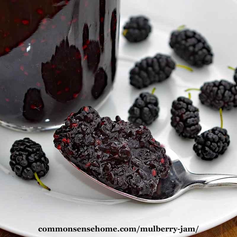 Large Of Mulberry Vs Blackberry