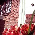 complejo_elvira-calamuchita-jardin-1