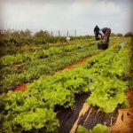 cultivo de agricultura ecológica