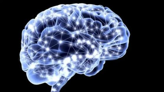 Resultado de imagen para cerebro