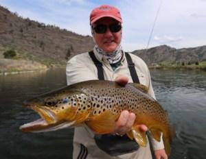Mike Gilroy Missouri Brown 3