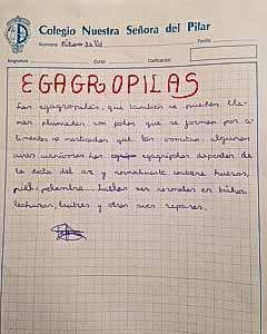 Fatima D No - Egagrópilas