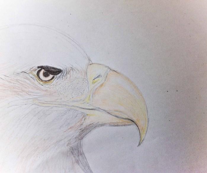 Maria Jose Tapia - Dibujo Aguila - CATEGORIA DESCONOCIDA