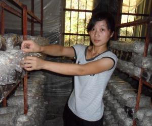 Chinees Mushroom (2)