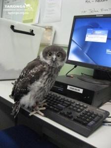 Owl_using_Computer_by_RedPigeon via DeviantArt.com