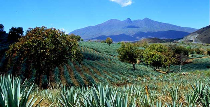 tequila jaliscop