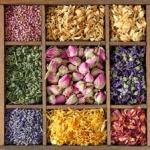 5 Herbal Teas For Energy