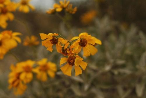 030314_wildflower_season2