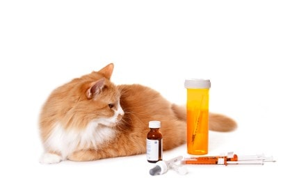 cat with medication