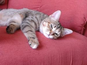 pain management in cats The Conscious Cat