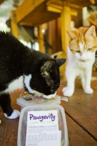 raw_food_for_cats
