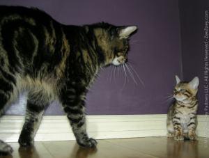 cat_meets_kitten