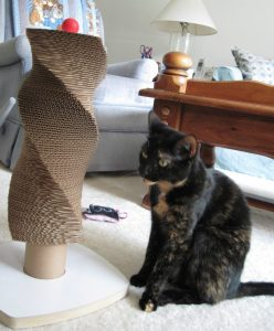 Allegra_with_moderncat_scratch_tower