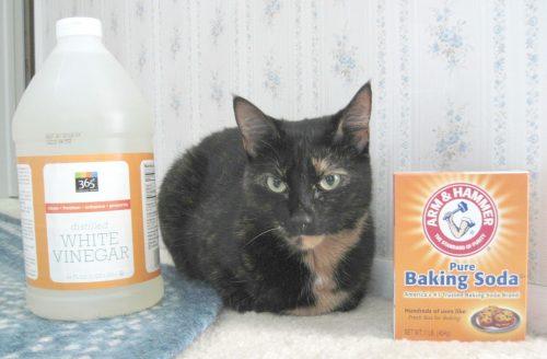 cat_baking_soda_white_vinegar