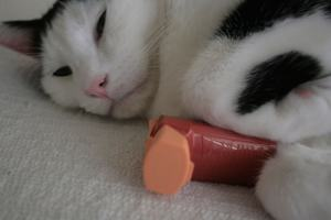 cat_with_inhaler