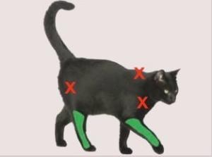 AAFP_feline_vaccine_guidelines