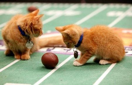 Super_Bowl_Cats