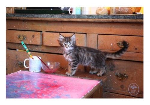 cat_painting