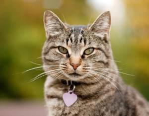 microchip_cat