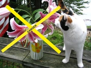 Easter_lilies_and_cats