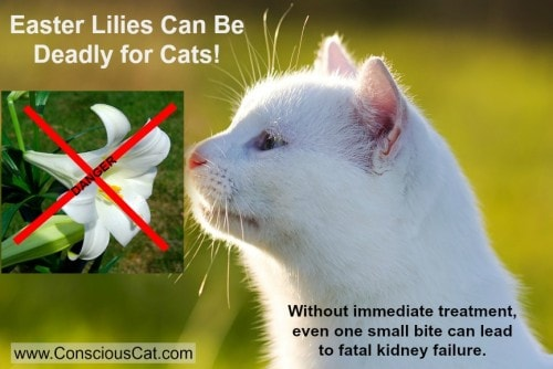 easter-lilies-cats