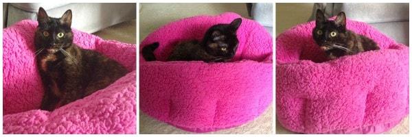 sherpa-cat-bed