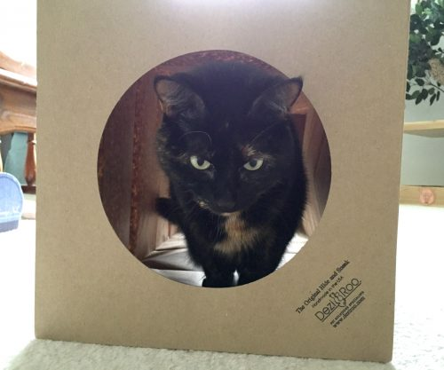 hide-and-sneak-cat-tunnel