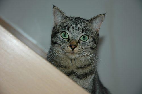 ADHD-cat