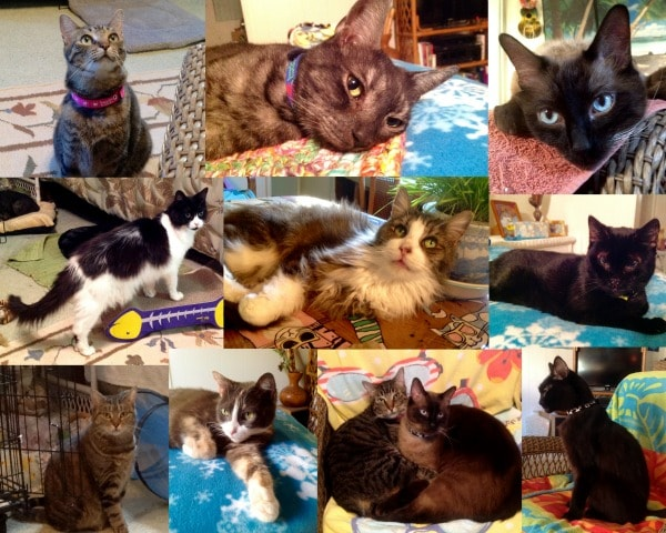 nine-cats-collage