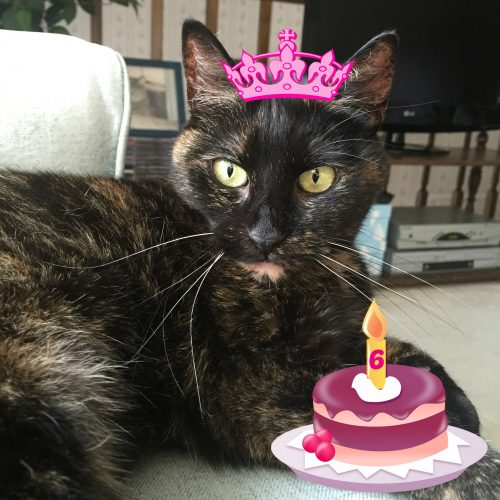 cat-birthday