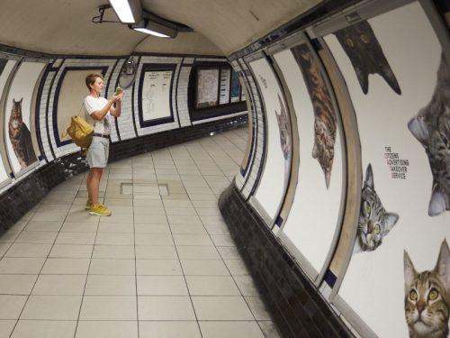 cats-london-tube