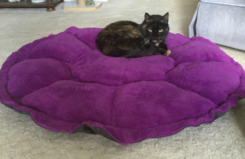 comfy-clamshell-cat-bed