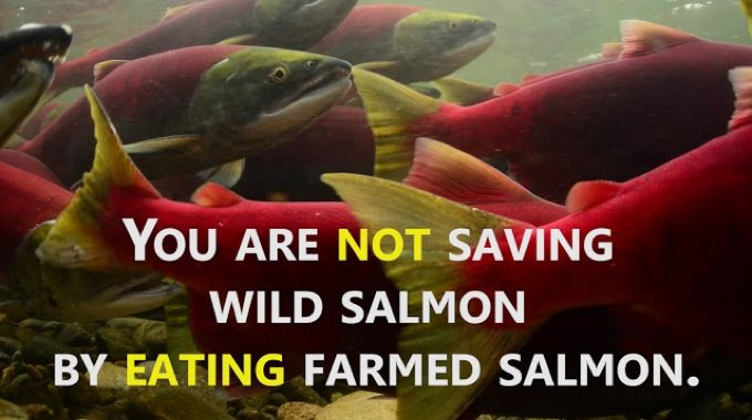 Farmed Salmon Is One of the Most Toxic Foods in the World According to Toxicology Testing
