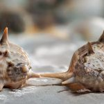 Biologists 'Transfer' a Memory From One Marine Snail to Another Using RNA Injection