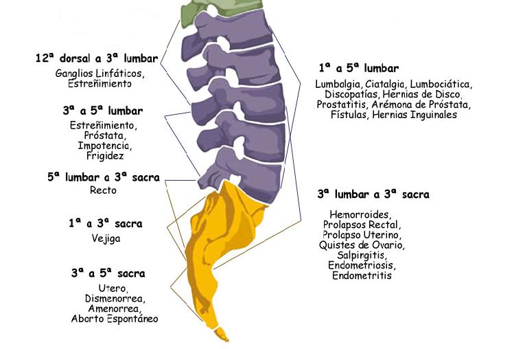 columna baja