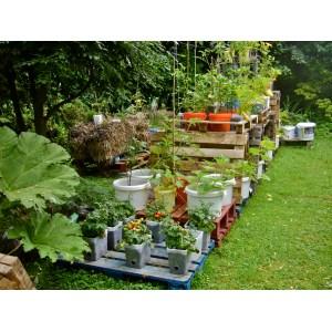 Mind General View On My Experimental Pallet Garden Container Gardening On Pallets A Success Van Cotm Pallet Container Gardening Pallet Container Garden
