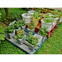 Small Crop Of Pallet Container Garden