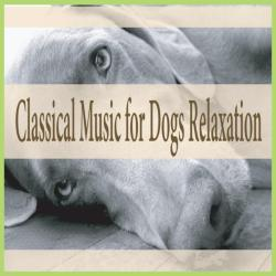 Small Of Calming Music For Dogs