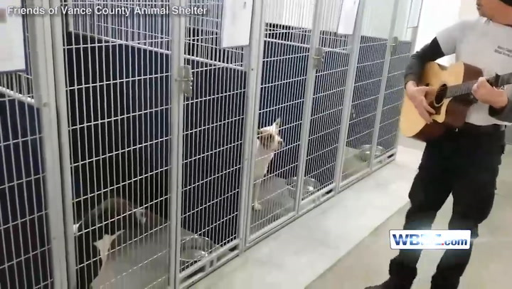 Terrific Adoptable Dogs Have Reaction To Animal Control Guitarperformance Adoptable Dogs Have Reaction To Animal Control Vance County Animal Shelter Facebook Vance County Animal Shelter Music houzz 01 Vance County Animal Shelter