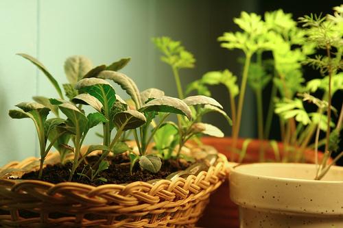 blogging seeds