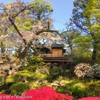 Destination: Japanese Tea Garden