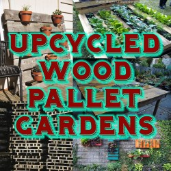 Great Upcycledpallets Upcycled Wood Pallet Gardens Your Imagination Is Your Limitation Pallet Planter Images