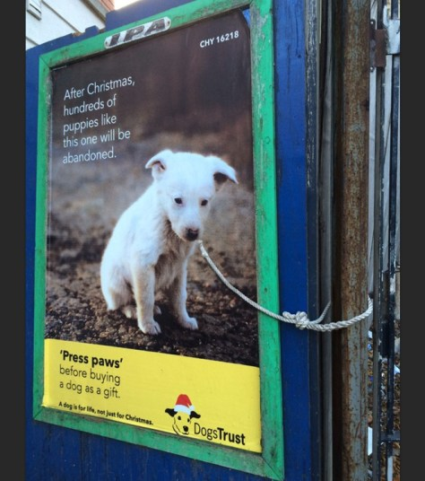 Dogs Trust poster campaign opposing the giving of dogs as Christmas presents