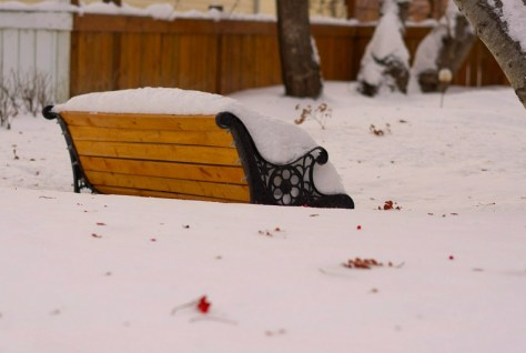 Mid-Winter Bench